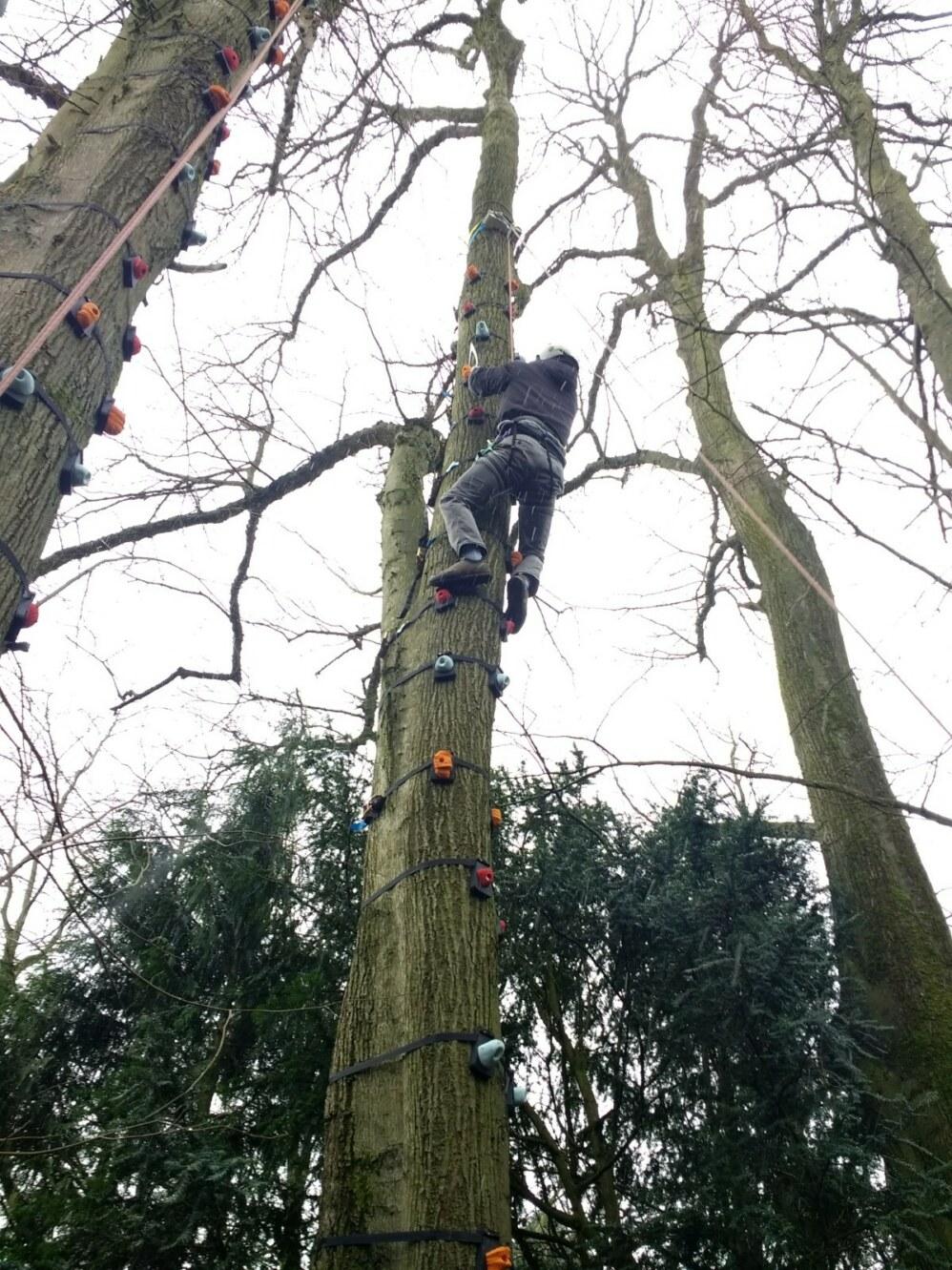 treeclimb3
