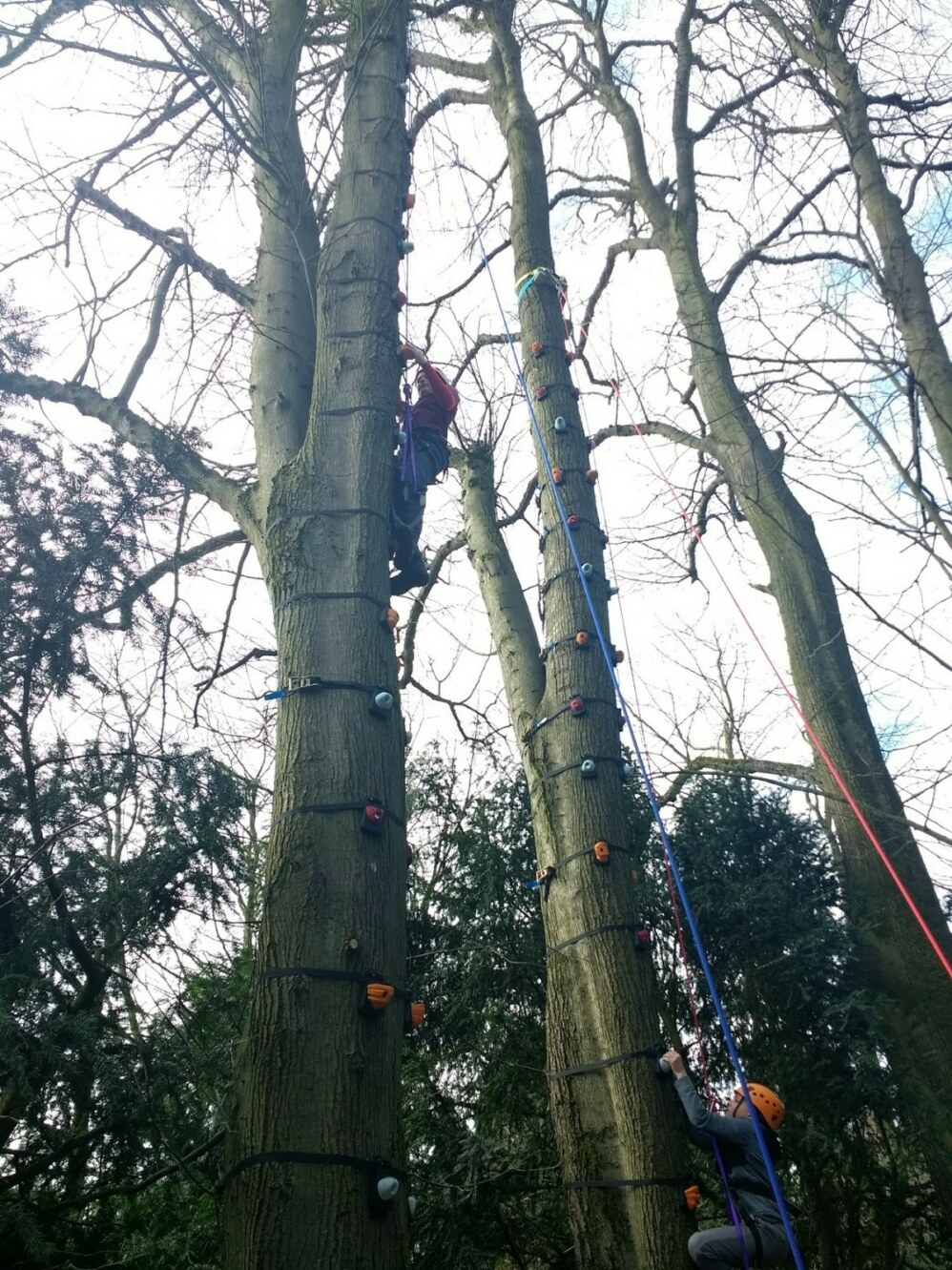 treeclimb4