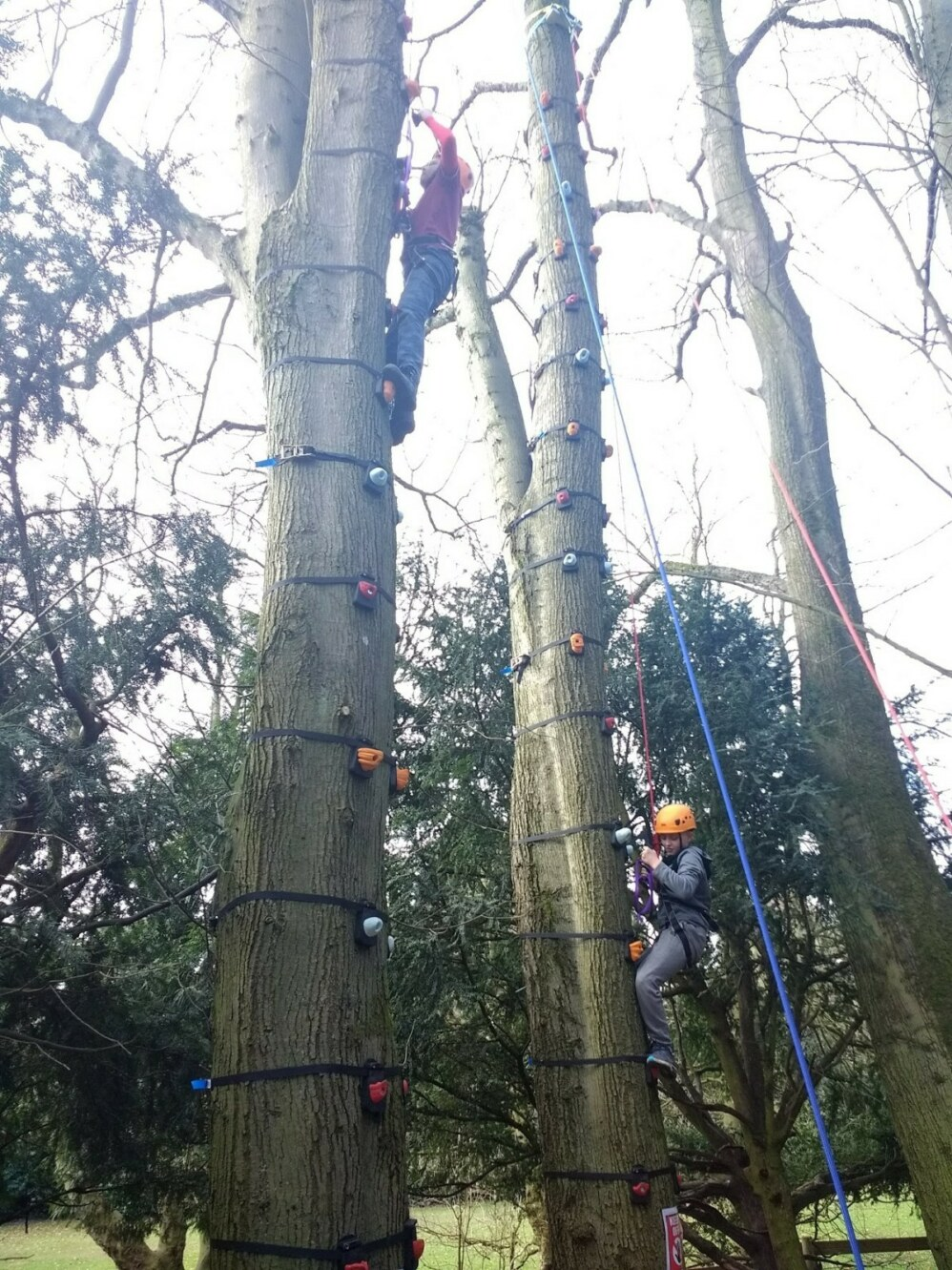 treeclimb6